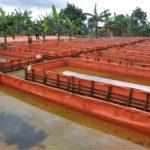 training-agribisnis-ikan-gurame